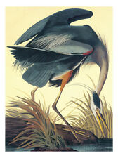 Great Blue Heron Art Poster Print by John James Audubon, 18x24