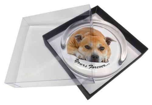Red Staffie Dog /'Yours Forever/' Glass Paperweight in Gift Box Christm AD-SBT8PW