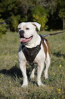Leather Dog Harness for Agitation | Soft Padded Dog Harness for Large Dog Breeds