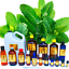 3ml-Essential-Oils-Many-Different-Oils-To-Choose-From-Buy-3-Get-1-Free thumbnail 90