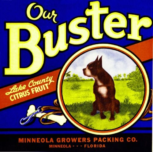 Minneola Florida Our Buster Boston Terrier Dog Orange Fruit Crate Label Print
