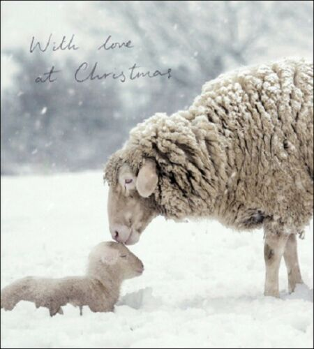 Pack of 5 With Love At Christmas Shelter /& Crisis Charity Christmas Cards