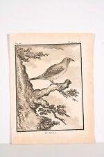 Histoire Naturelle Oiseaux Buffon v 1780 LE BLUET , Ornithologie