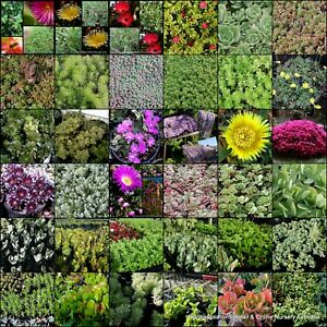 20 Succulent Plants 10 Types In Pots Hardy Plants