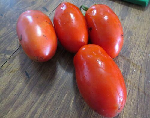 Tomato Seeds La Roma III Hybrid Tomato Seeds Pick 25 To 250 Seeds