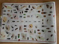 Beetles Poster/38 X 247/free Shipping/beetle/insects/educational