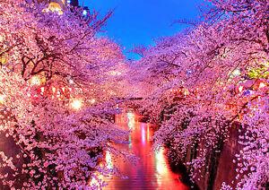 Details About Sticker Autocollant Poster Paysage Japon Cerisier En Fleur Cherry Blossom 3