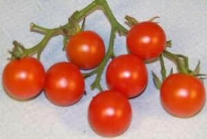 tomato-CHERRY-RED-small-1-oz-fruit-32-SEEDS-GroCo