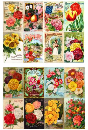 """Decoupage Paper 10sh A4 // 8/""""x12/"""" Flowers Roses FLONZ 016 Vintage Scrapbooking"""