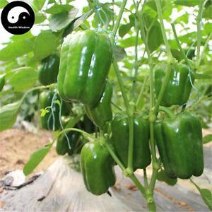 Buy Green Sweet Pepper Seeds Plant Bell Pepper Vegetables Pepper