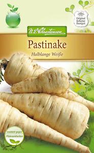 Pastinake-039-Halblange-Weise-039-Pastinaca-sativa-Pastinaken-Samen-fur-5-7-lfm-4075