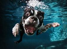 FUNNY UNDERWATER STAFFY DOG - QUALITY MOUSE MAT / PAD