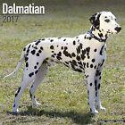 Dalmatian Calendar 2017 by Avonside Publishing Ltd. (Paperback, 2016)