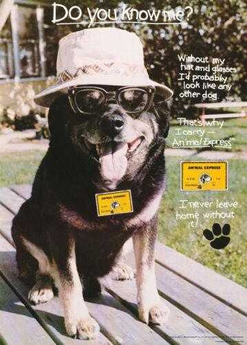 ANIMAL EXPRESS  FREE SHIP  #13-464  LC17 M POSTER:ANIMALS:COMICAL DOG:SUN BEAR