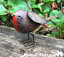 3 TIN ROBIN garden ornaments hand painted metal indoor outdoor bird decoration