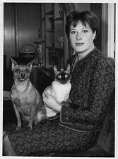 Photo originale Colette Renard chien chat