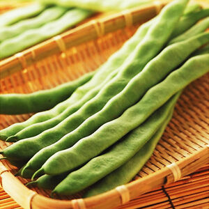 bean seed 15 seeds american beans phaseolus legume vegetable garden