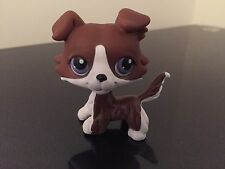 Littlest Pet Shop LPS Collie Puppy Dog Chocolate White Purple Eyes USA Seller