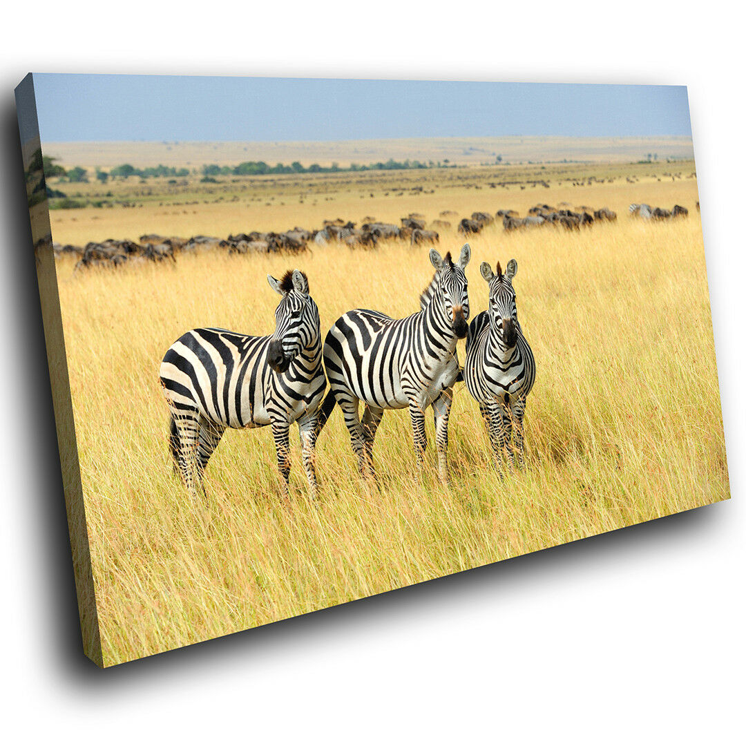 A634 Africa Zebra Gelb Grass Funky Animal Canvas Wall Art Large Picture Prints