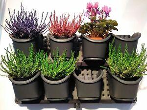 Vertikal Garten Grun Wand Ausdehnbar Pflanze Wachstums Set