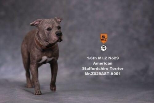 Mr.Z 1//6 Animal Model MRZ029 A001 American Staffordshire Terrier Figure Toy