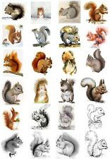 24 Mixed Squirrel Large Sticky White Paper Stickers Labels New