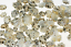 Star-Limpet-Seashells-Shells-Qty25-Tiny-Locate-Lost-Objects-Find-Your-Way-Ocean thumbnail 1