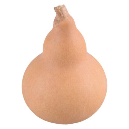5pcs Natural Bottle Gourds Calabash Cucurbit for Fortune Auspicious Craft Decor