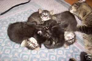 HELP-MOM-CATS-LITTER-OF-KITTENS-REC-PHOTO-BENEFITS-FERAL-CAT-RESCUE-NON-PROFIT