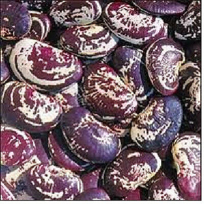 Bean, GIANT Speckled Christmas Lima (pole)  non-GMO Heirloom 20 vegetable seeds