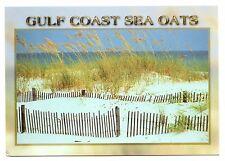 Gulf Coast Sea Oats Postcard Florida Sand Beach Dunes Fence Unposted