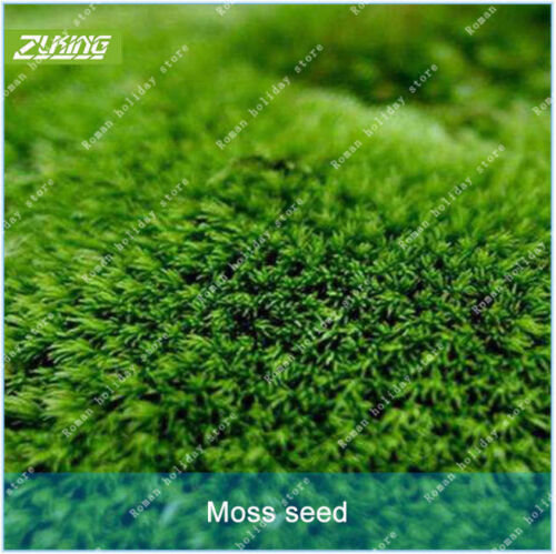ZLKING 300 Pcs Moss Seed Flower Seeds Bonsai Plants Free Shipping No TAX NEW S U