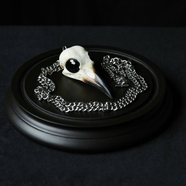 Amazing REAL CROW SKULL pendant Goth Pagan Wicca taxidermy jewellery