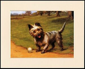 Beautiful Cairn Terrier Ball Adorable Dog - s-l300  Pictures_603969  .jpg