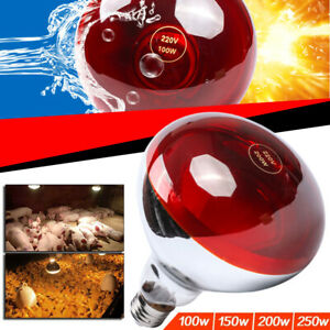 Infra Red Heat Lamp E27 Bulb Poultry Chicken Brooder Chicks Hatching Piglet Ebay