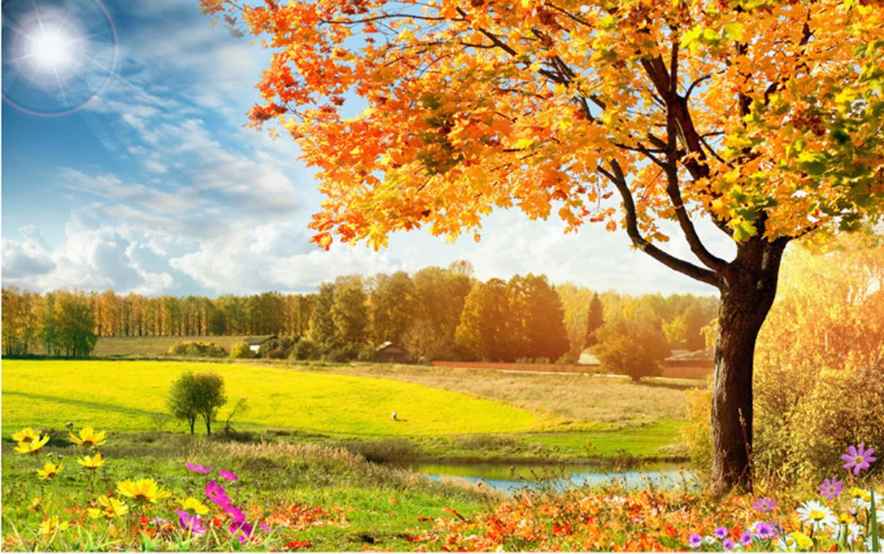 3D 3D 3D Herbst Wald Gras 85 Tapete Wandgemälde Tapeten Bild Familie DE Summer | Erste Qualität  d314f1