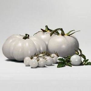 Rare-WHITE-Tomato-Very-Tasty-Nutritive-Heath-Vegetables-Seeds-100PCS-Heirloom-To