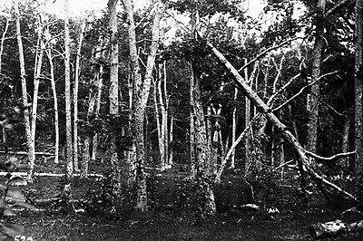 Battered Trees on Culp/'s Hill after Gettysburg Battle New 5x7 Civil War Photo