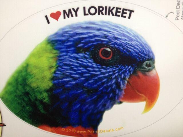 Blue /& Gold Macaw Parrot Exotic Bird Vinyl Decal Bumper Sticker