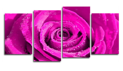 BRIGHT PINK ROSE CANVAS ART PRINT FLORAL FLOWERS WALL ART FLO28