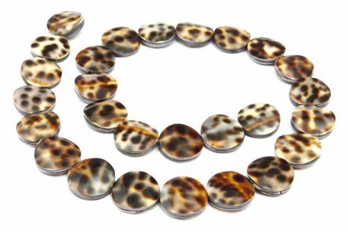 2 Tiger-Kauri escargot pièces 16 mm Coquillage perles strang Kauri coquillage muam