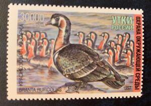 La Russie, 1997 Russes Duck Timbre Neuf Sans Charnière Soulager Le Rhumatisme