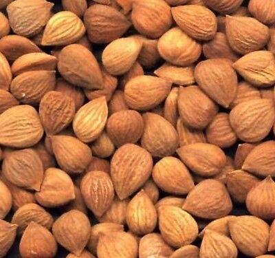 3 Pound Organic Bitter Raw Apricot Kernels Seeds Bonus 40 PAGE Info Seed Kernel