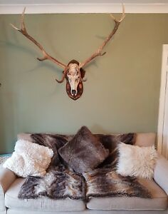 Image Is Loading Taxidermy Large Red Stag Deer Antlers Horns Interior