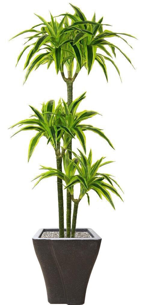 Best Artificial 1.5m 150cm Dracaena Dragon Árbol Planta Tropical Invernadero