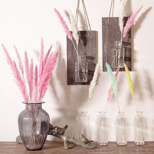 5Pcs Natural Bulrush Dried Flower Phragmites Branch DIY Wedding Home Party Decor