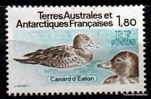 TAAF-CANARD-D-EATON-Yt97-neuf-scan-haute-def-CA25