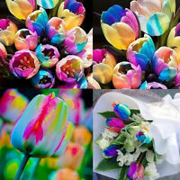 5Pc World Rare Rainbow Tulip Bulbs Seeds Beautiful Flower Seed Home Garden Decor