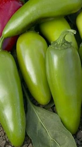 Jalapeno M pepper Seed pack 25