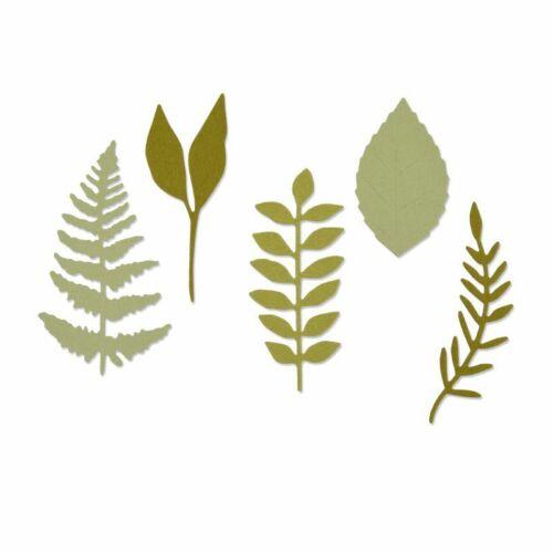 Sizzix Thinlits Perforateur 5tlg-Prairies feuilles by Sophie Guilar